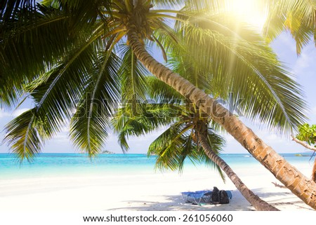 The sun loungers under palms on solaceon the beach. Rest in the hotel in the Seychelles. - stock photo