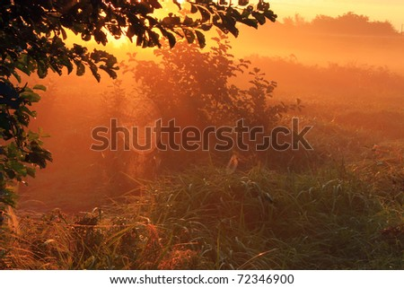 The sun rays pass through the fog on a spring morning - stock photo