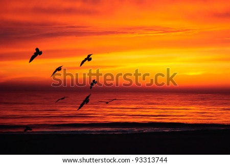The sun rises as a group of birds flies by