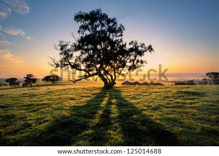 The sun rises behind a tree in the Clare Valley, South Australia - stock photo