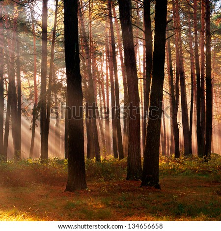 The sun's rays breaking through the trees in a forest in autumn season - stock photo