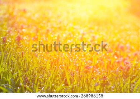 The sun's rays from above and green grass. abstract composition