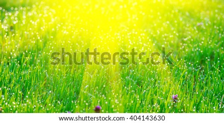 The sun's rays from above and green grass with dew. Natural composition - stock photo