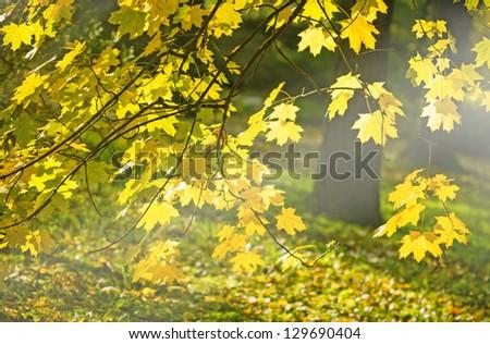 The sun's rays on the fall foliage - stock photo