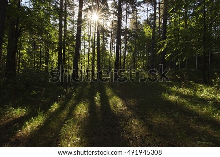 The sun's rays through the branches forest trees