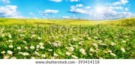 The sun shines on a wide green meadow with lots of daisy flowers, with blue sky and white clouds in the background