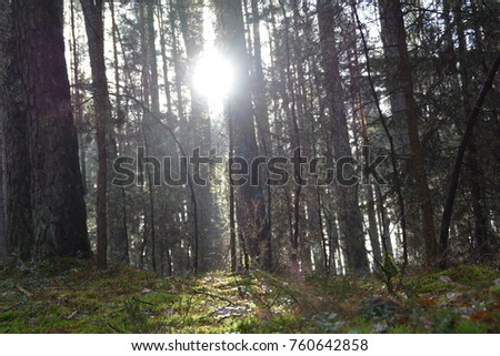 The sun shines through an autumnal forest