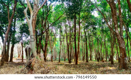 The sun shines through the trees. The ground is washed with dried leaves colorful colors background