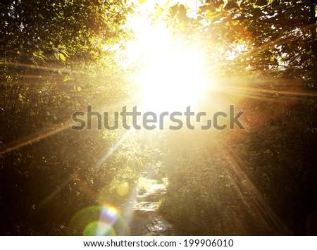 The sun through trees.  - stock photo