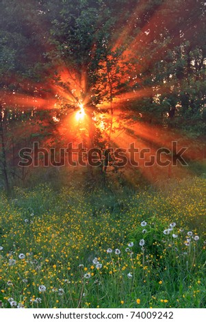 The sunrays pass through the fog on a spring morning - stock photo