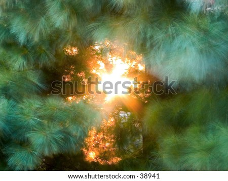 the sunset through some pine trees - stock photo