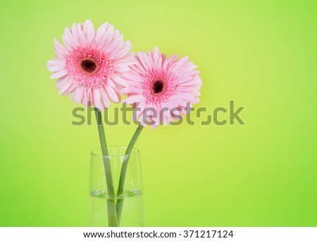 the sweet pink  Gerbera flower, romantic moment - stock photo