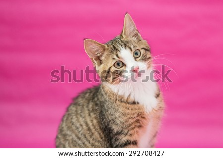 the sweetest kittens - against pink background