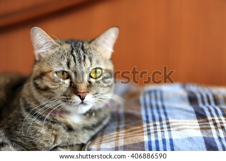 The tabby cat lying on the bed, - stock photo