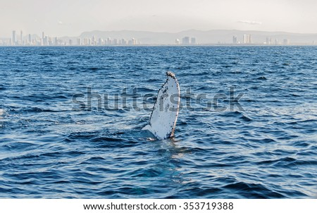The tail of a Humpback Whale (Megaptera novaeangliae) rise above the water against Surfers Paradise skyline in Gold Coast Queensland Australia - stock photo