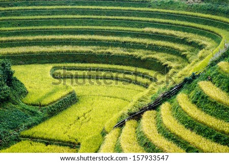 the terraced fields on the slopes is to land - a particularly rare type fields in the world