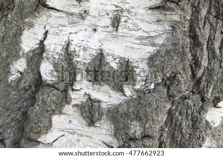 The texture of a tree trunk close-up