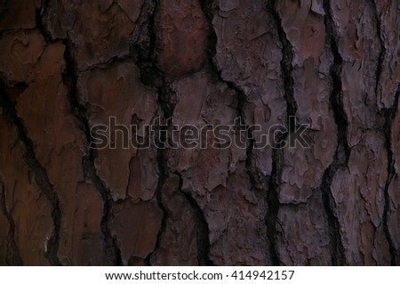 The texture of dry bark of a tree