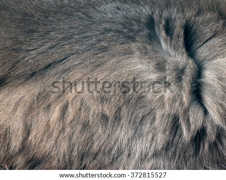 The texture of fur. The fur is beautiful, long hair. Shades of gray - dark and light.