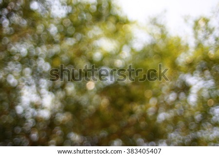 the texture of green leaves. blur view