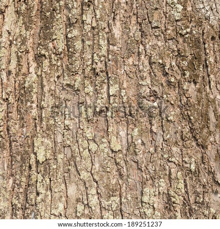 The texture of real wood for texture and background use