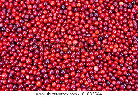 The texture of ripe red berries lingonberry - stock photo