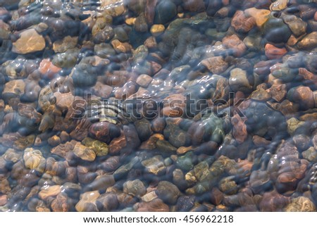 The texture of the bottom. The stones visible under the clear water. Water ripples of the river, the sun's rays on the rocks. - stock photo