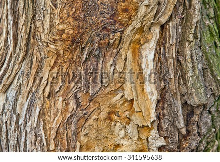 The texture of tree bark - stock photo