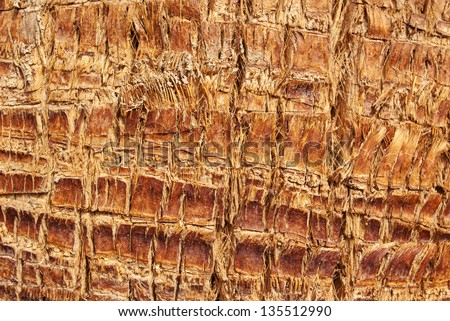 The texture of tree bark for background - stock photo