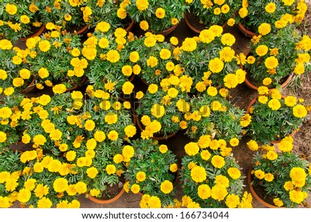 the theme of the nursery garden--flower - stock photo