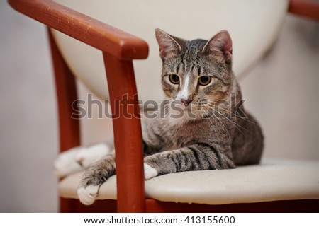 The thoughtful striped cat lies on a chair. - stock photo
