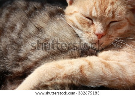 The tiger (striped) red cat relaxing cat sleeps on a soft comfortable one hundred gray, soft focus, cute funny cat close up, young caty, domestic cat, elegant cat