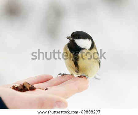 The titmouse sitting on a palm - stock photo
