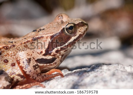 The toad sits on a rock close up