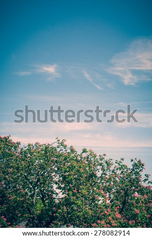 The top of some amond trees in front of a lightly clouded sky on a sunny day - stock photo