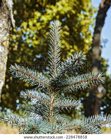 The top of the tree on a sunny day - stock photo