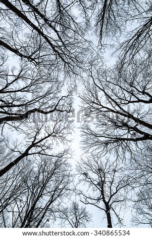 The tops of the trees in the winter against the sky. - stock photo