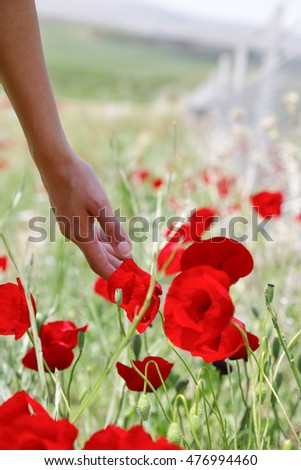 The touch to the red flower. Young woman hand.