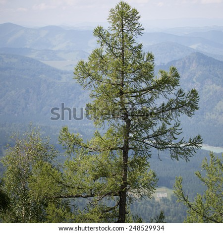 The tree in the mountains - stock photo