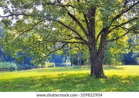 The tree in the park - stock photo