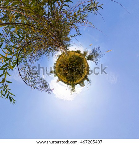 The tree in the tall green grass in the fall. Stereographic spherical panorama of Little Planet