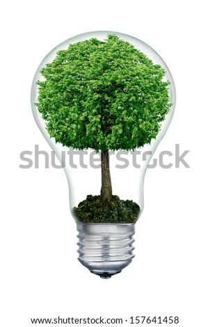 The tree inside of the light bulb isolated on white. - stock photo