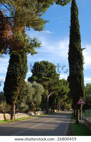 The Tree-Lined Road from Polignano a Mare to Castellana, Bari, Apulia, Italy - stock photo