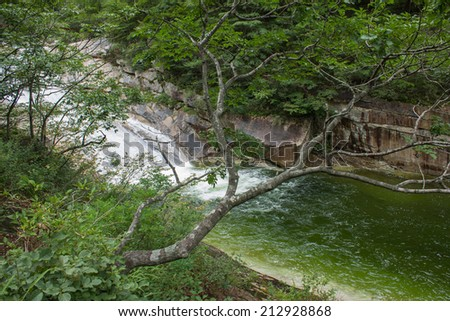 the tree on the background of a mountain river, Mount Kumgang. North Korea.