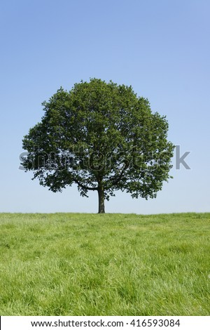 The tree on the hill top - stock photo