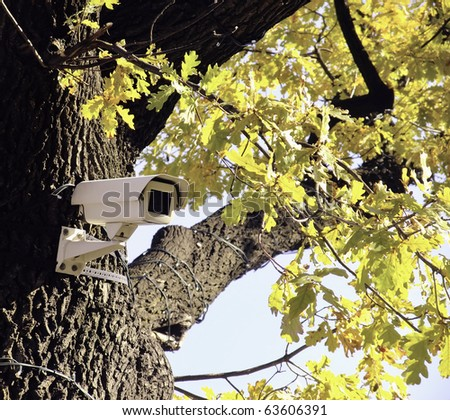 The tree that sees - stock photo