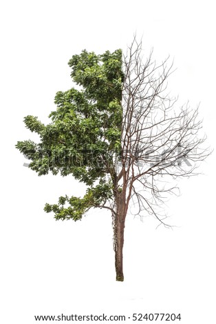 Half Alive Tree Related Keywords Suggestions Half Alive Tree