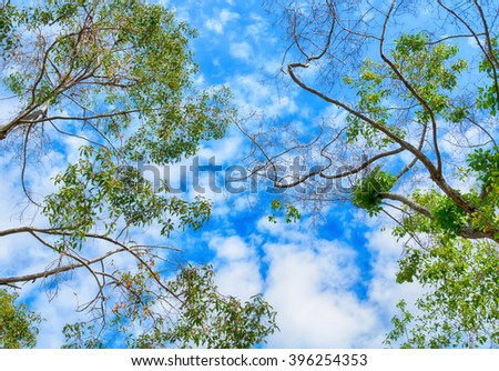 the trees. bottom view and sky with clouds in the forest in spring,Thailand