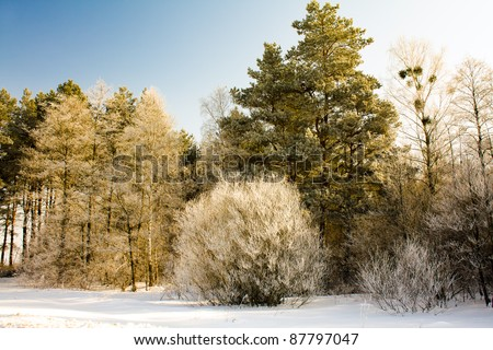 The trees covered with hoarfrost in a winter season - stock photo