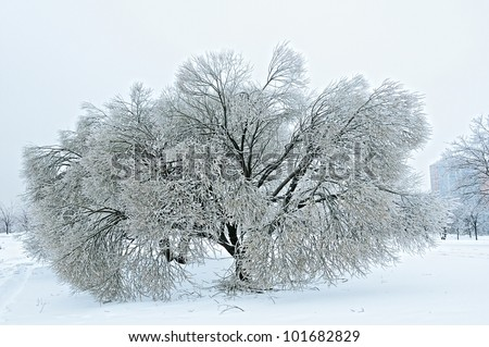 The trees covered with ice, after a winter rain